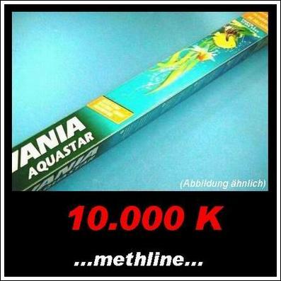 Leuchtstofflampe 10.000K Aquastar 38W